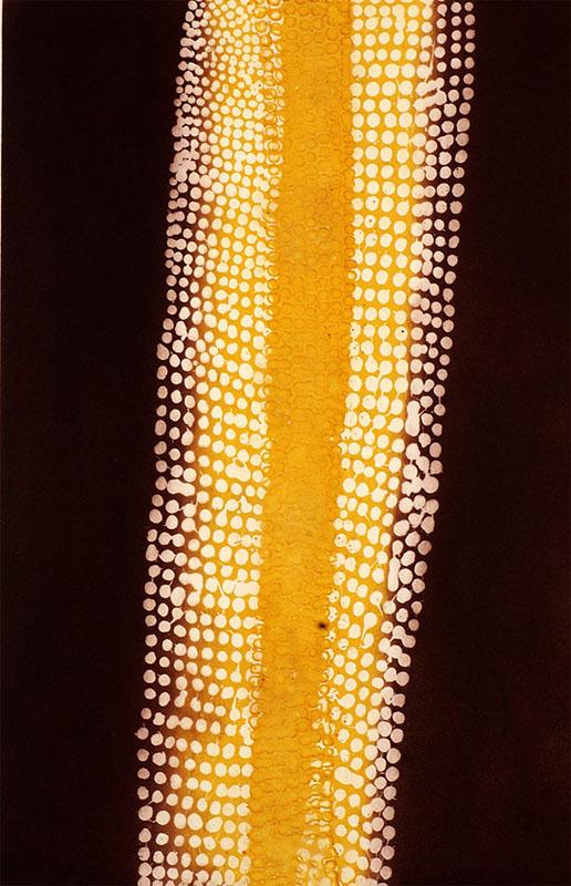 Paddy Tjungurrayi Carroll, Mukaki II - Bush Plumb Dreaming, Aboriginal art